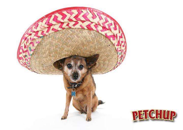 Petchup Dog Wearing Sombrero