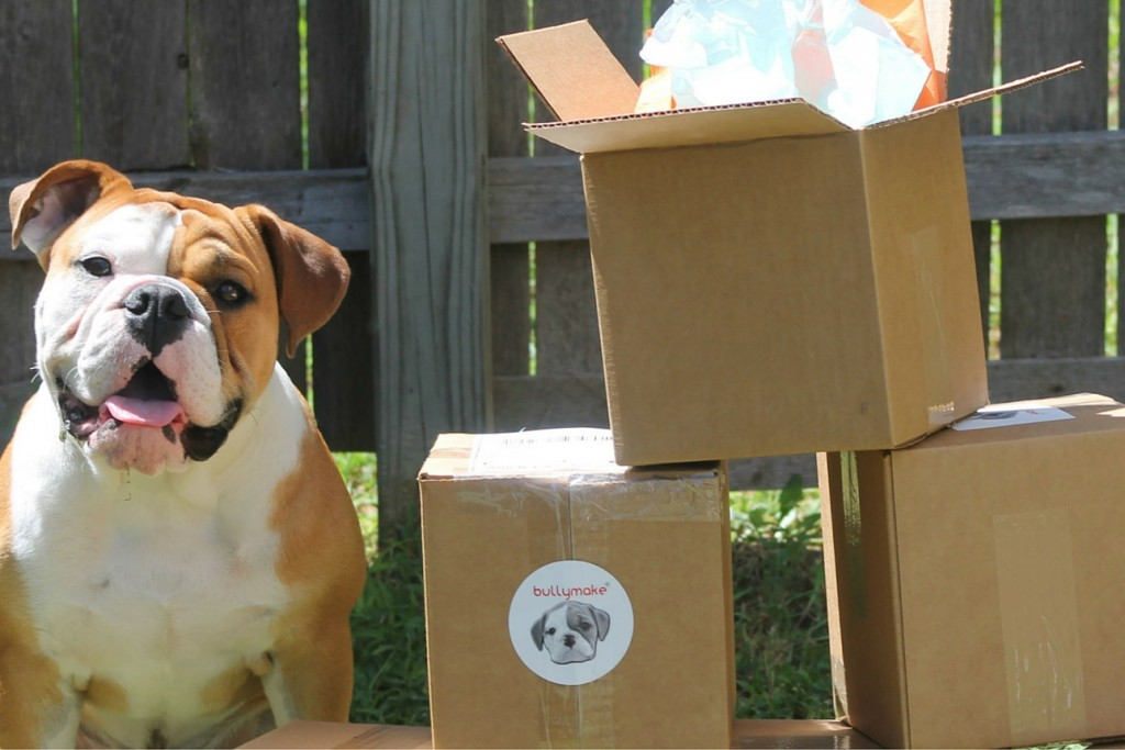 Bullymake boxes with power chewing dog
